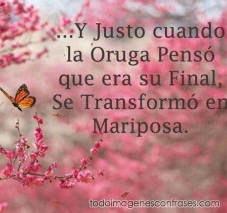 Imágenes Con Frases La Oruga Que Se Transformó En Mariposa